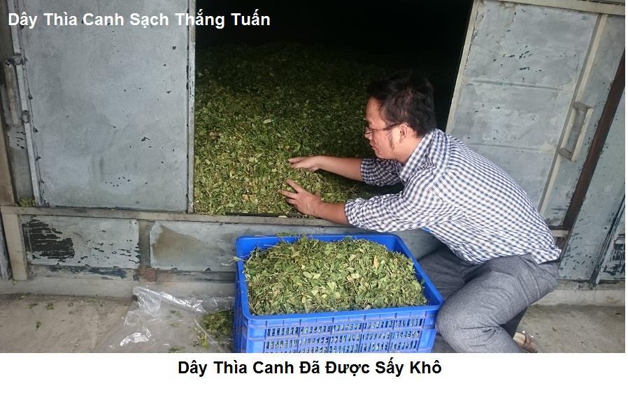 Hình Ảnh Dây Thìa Canh Nam Định