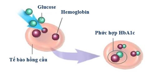 cách tạo HbAc1
