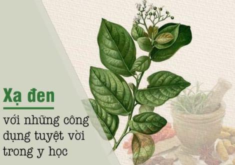 Nam Dược Xạ Đen – Trị Nam Nhân Người Việt