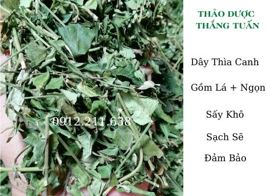 Dây Thìa Canh Nam ĐỊnh